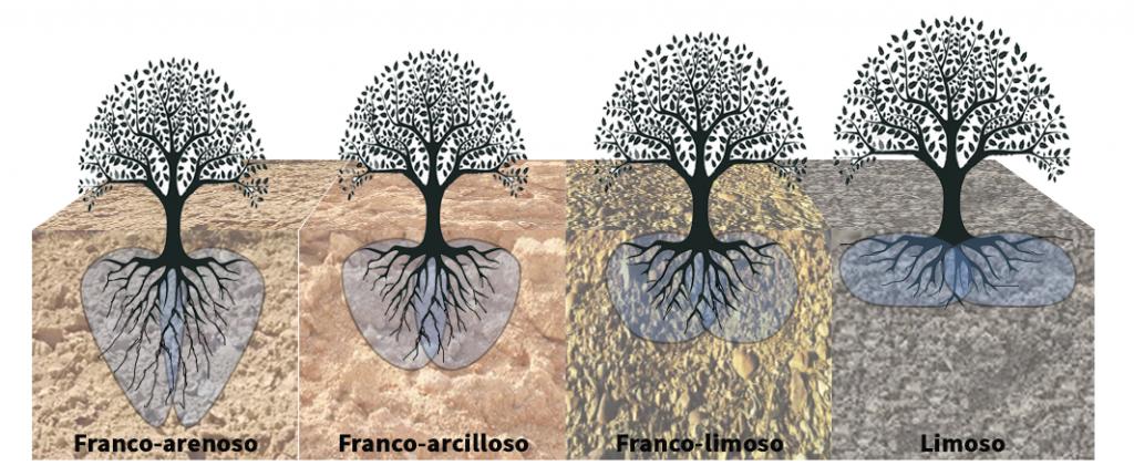 Tipos de bulbos y sistema radicular-Control con Sondas y sensores en cultivos