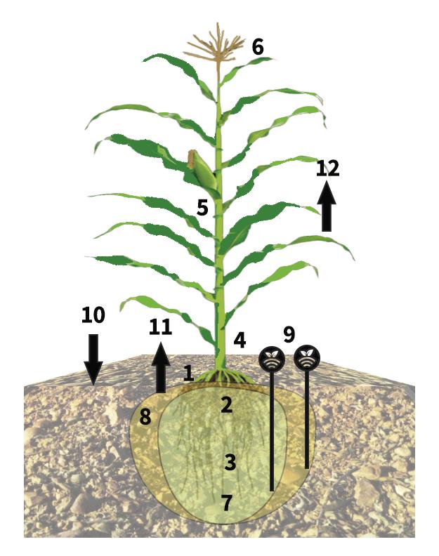 Esquema de riego con sondas en herbáceos