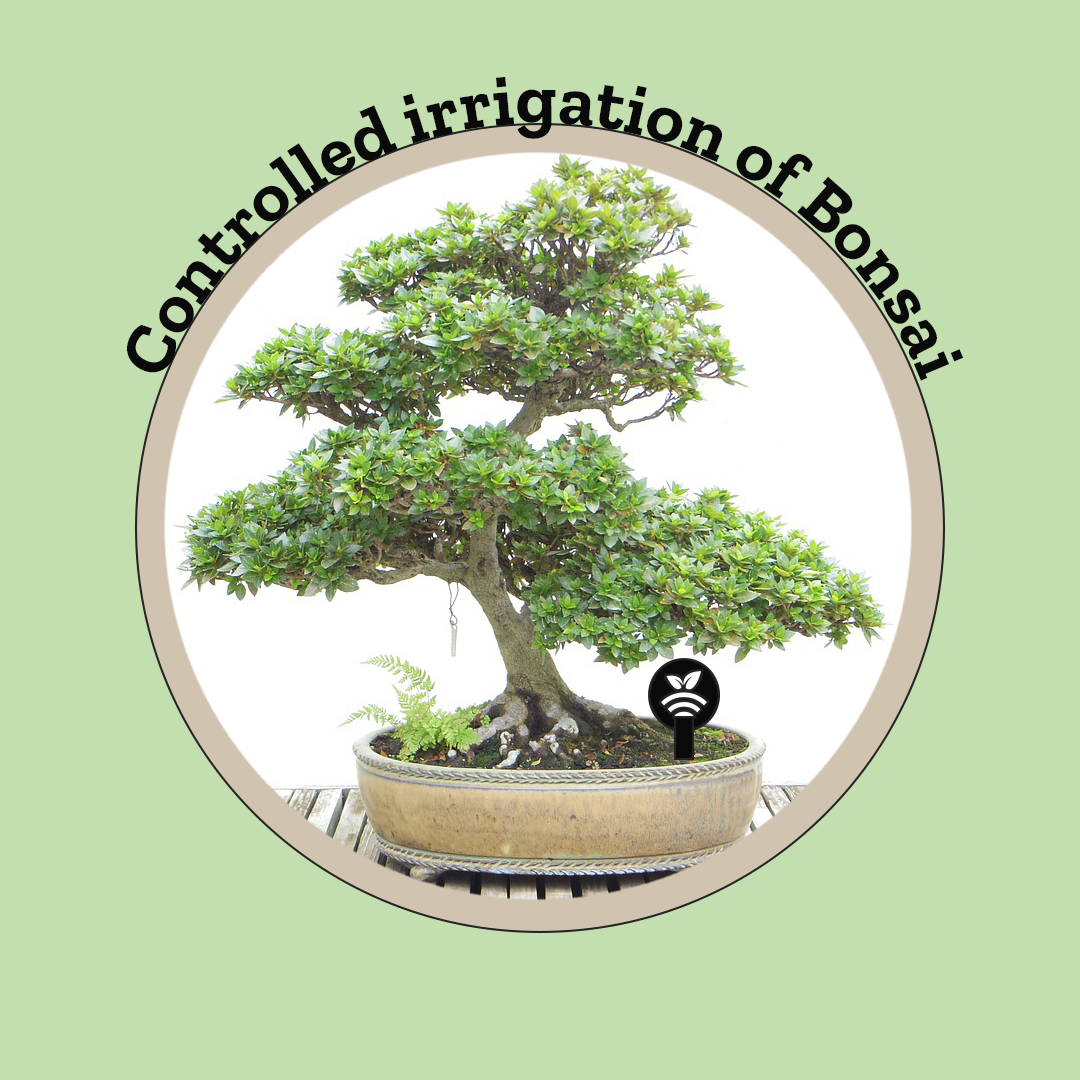 Controlled irrigation of Bonsai