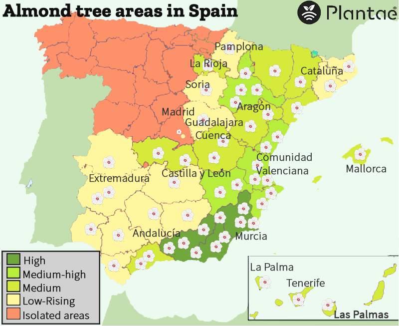 The almond tree in Spain, varieties and care-Controlled irrigation