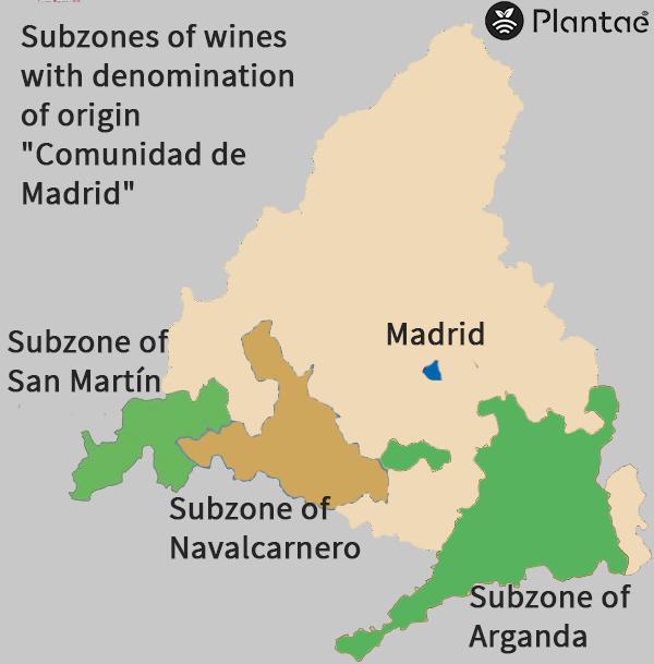 Madrid wines