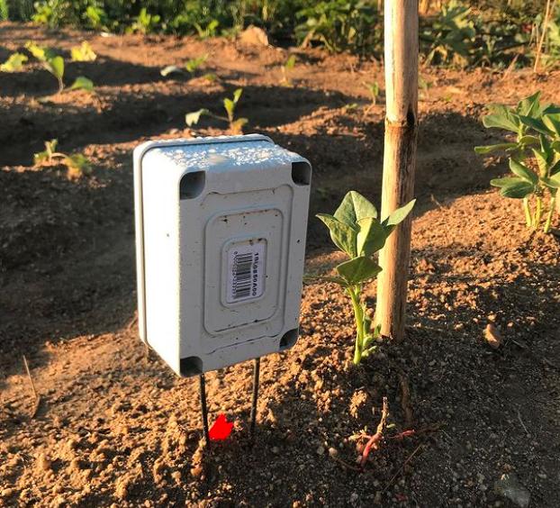 Sensor en huerto con cultivo por surcos