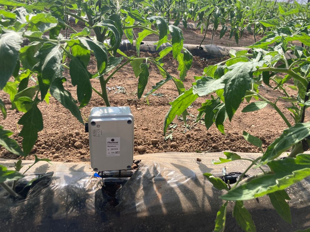Moisture probe in hydroponic irrigation