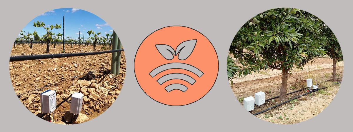 Sensores y sondas en cultivos intensivos