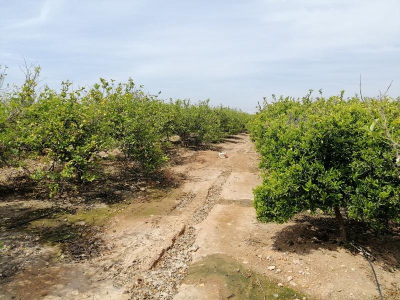 Cultivos controlados por sensores/sondas de humedad