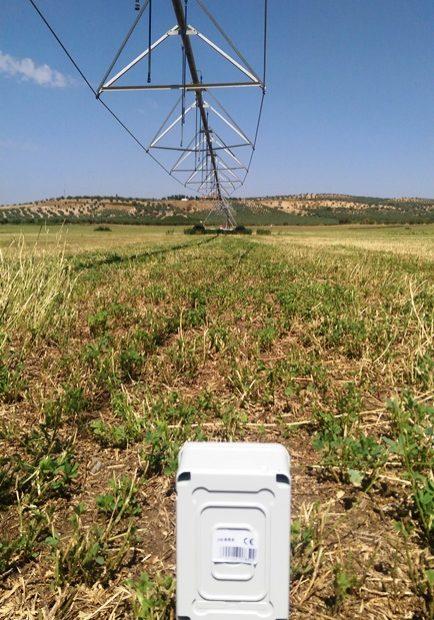 Sensor en alfalfa